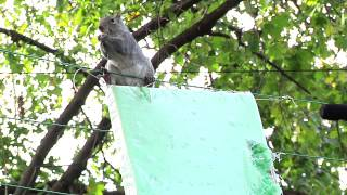Vertical Backyard Bag Squirrel Feeder!