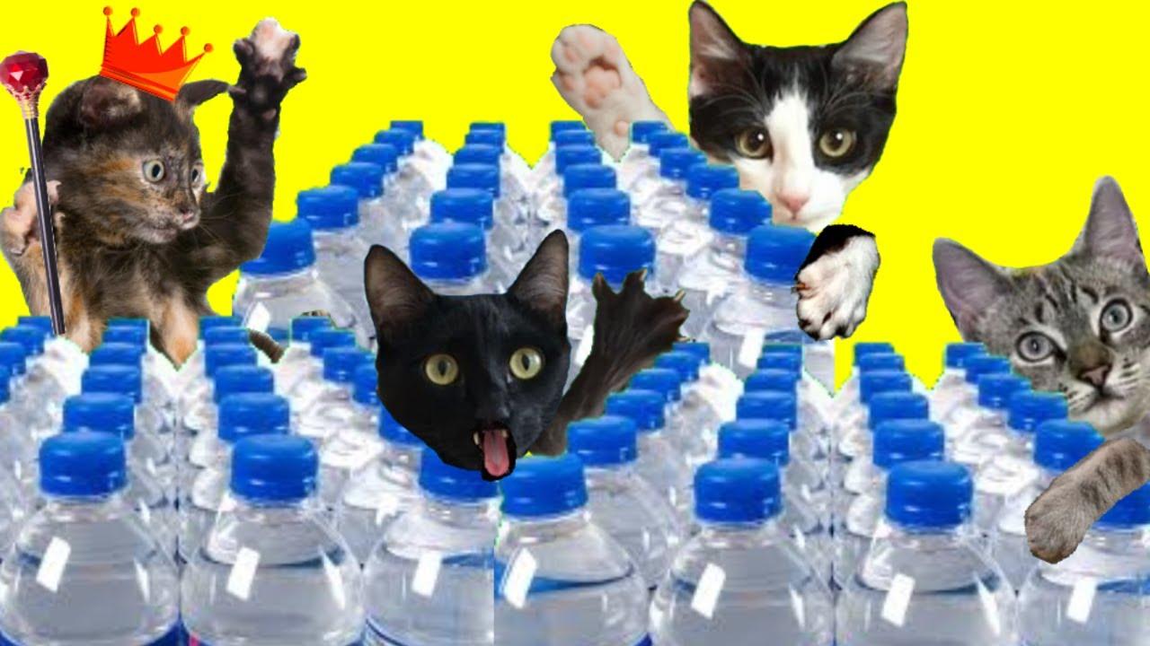 Gatos Luna y Estrella el gato Rey 24h nos reta al desafío de botellas de agua / Videos de gatitos