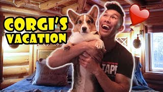 giving-a-vacation-to-my-corgi-renting-a-log-cabin-for-him-life-after-college-ep-620