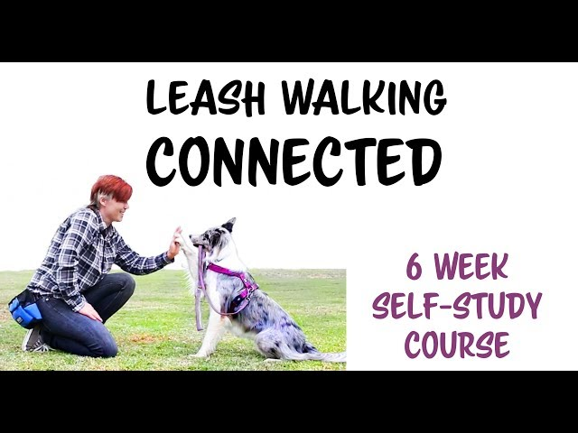 Leash Walking CONNECTED - loose leash walking course