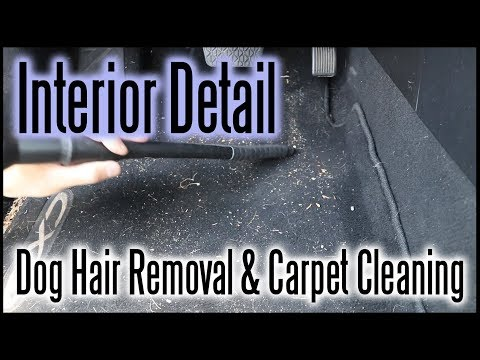Interior Detailing / Dog Hair Removal and Carpet Cleaning
