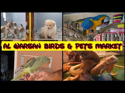 Dubai Pet market | Biggest pet market in UAE| Al  Warsan bir
