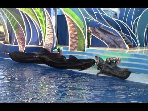 Dolphin Island Christmas at SeaWorld San Diego (12/18/14)