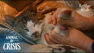 Poor Cat Who Lost Legs Has One Hope To Walk Again | Animal in Crisis EP85