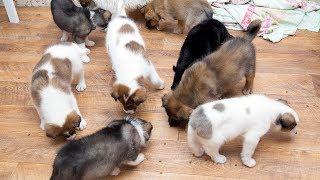 Смотреть всем Щенки даром в Новосибирске объявления о щенках В добрые руки