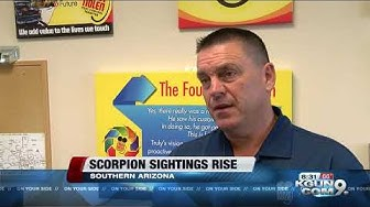Scorpion sightings rise for pest control companies in Arizona