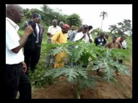 IFSERAR-FUNAAB  2014 Farmers Field Day