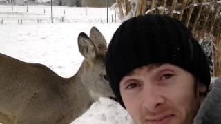 Приручить диких косуль реально и просто, нужно только любить природу и животных!