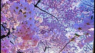 Самая красивая весна. Прага