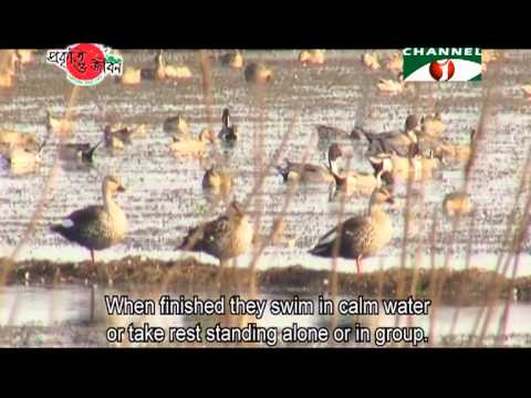 Nature and Life   Episode 125 (Birds of Haor)