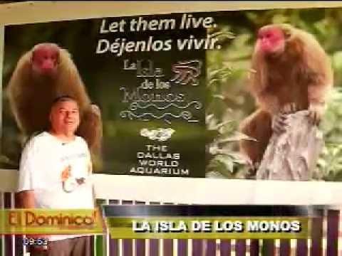 La isla de los monos: un refugio de supervivencia en la Amazonía