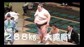 【大露羅】 歴代最重量288kgの大露羅に対し押しに徹する若肥前/体重差1...
