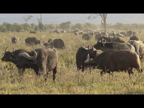 4K Lake Nakuru Nationalpark (Ultra HD)