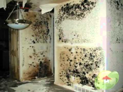 What Does Mold Smell Like >> What does Mold look like ? - YouTube