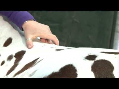 Determining how wide a gullet channel needs to be for your horse: RP Saddle Fitting Tutorial