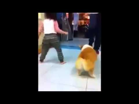 Butt baby and dog funny dance – Funny baby videos