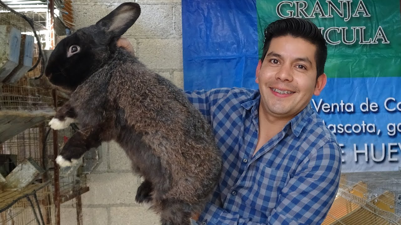 Granja De Conejos Maranatha Granjacunicula Youtube