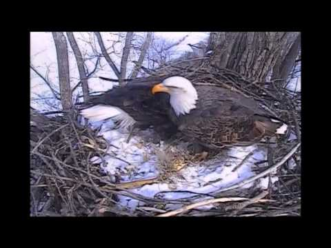 DECORAH EAGLES 1112015  11:47 AM  CST  MOM AND DAD WITH CLOSE UPS