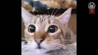 Коты пугаются