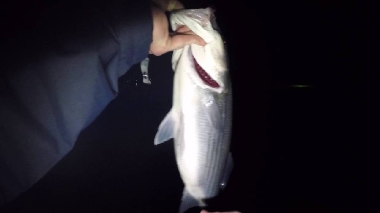 fishing green monster lights for striper - youtube, Reel Combo