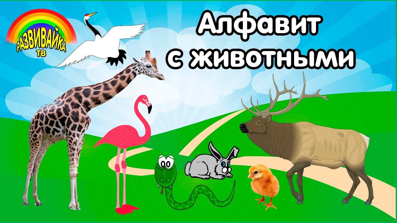 Алфавит с животными. Как говорят животные? Слушаем звуки ...