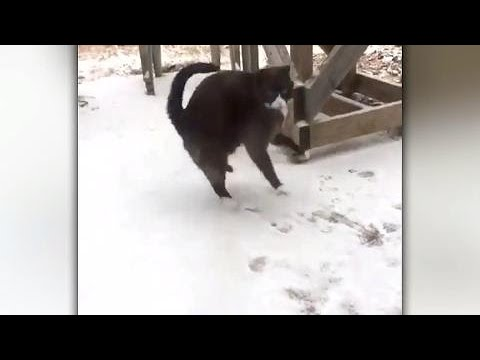 cat-s-reaction-to-first-time-snow-is-exactly-what-you-d-expect