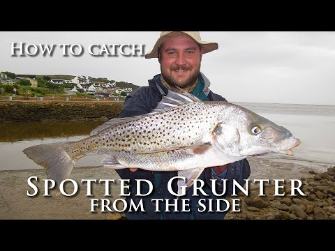 How To Catch Spotted Grunter From The Side - Conventional Fishing Tips And Techniques