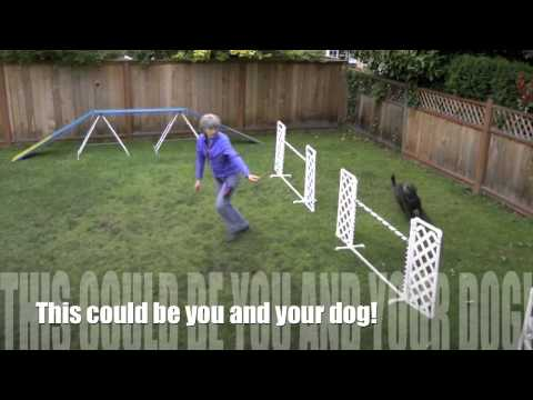 Backyard Dog Agility.