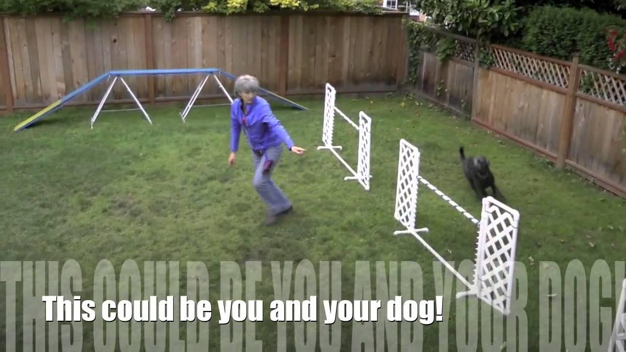 Backyard dog agility. - YouTube