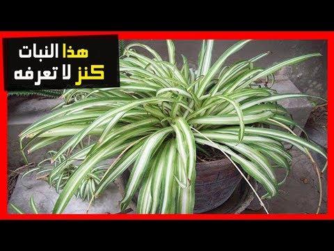 لو كان لديك اي من هذه النباتات في منزلك ، فأنت تمتلك كنز لا يقدر بثمن