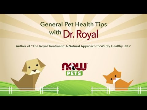 General Pet Health Tips with Dr. Royal | NOW Pets
