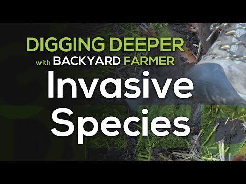 Digging Deeper:  Invasive Species