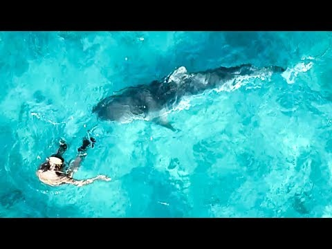 YBS Lifestyle Ep 7 - CRAZY TIGER SHARK AND DOLPHIN ENCOUNTER | Crayfish Catch And Cook