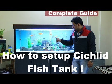 How to setup an Aquarium (Cichlids fish tank - India ) complete guide !