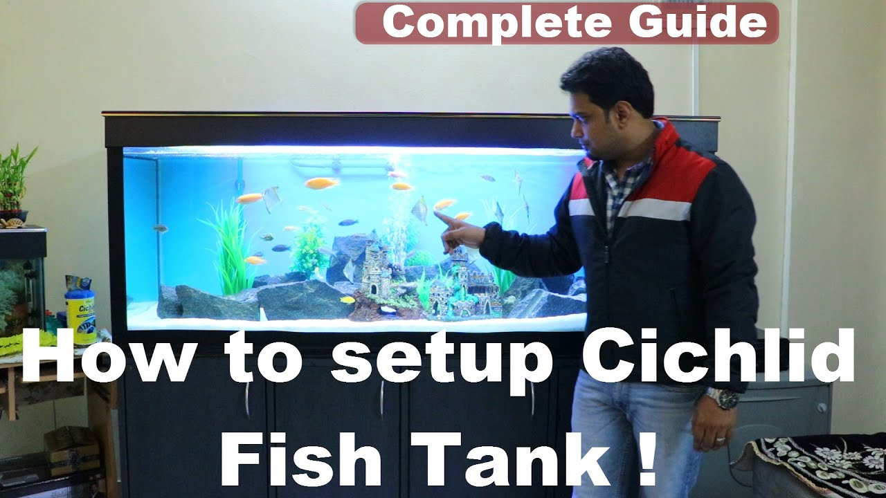 a guide to setting up an aquarium Setting-up a freshwater aquarium step-by-step directions once you have acquired the necessary equipment and decided the location of your new freshwater aquarium, it's time to begin setting everything up.