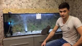 Выращивание осетров в аквариуме. Начало