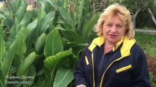 видео Календарь ухода за газоном: полив, стрижка, удобрение