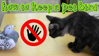 How to Keep a Pet Bird or Other Animals when You Have Cats