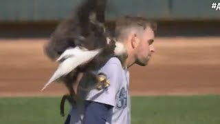 MLB Mariners pitcher James Paxton SURVIVES Eagle ATTACK!