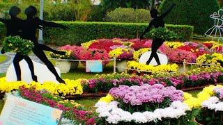 "2019士林官邸菊展-花之圓舞曲""Waltz of the Flowers"" 慢慢愛""Love Slowly"" 2019 Shilin Residence Chrysanthemum Show"