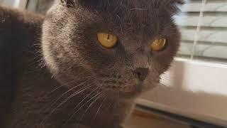 Коты и расческа.  Реакция на звук.