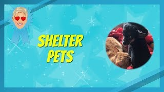 Your Best Shelter Pet Videos