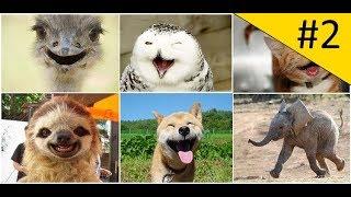 Приколы про собак и Новые Приколы с животными 2018 Очень смешное видео