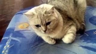 Кошка не хочет Петь)))