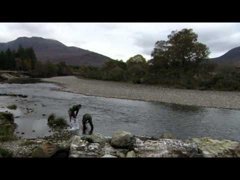 Britain's Big Wildlife Revival   4 6, Rivers
