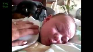 офигеть как собаки защищают детей