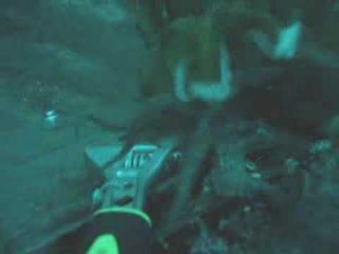 Cuttlefish Attacks Octopus