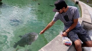 ZOMBIE FISH FOUND in CEMETERY Pond! (CAUGHT ON CAMERA)