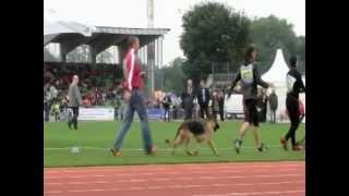 dogschoolnichiou は共有ビデオファイルです。