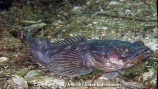যে মাছ সারা রাত গান গায় , কারন জানলে চোখ কপালে উঠবে
